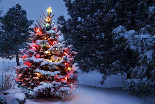 112217-christmas-tree-adobestock_54236814